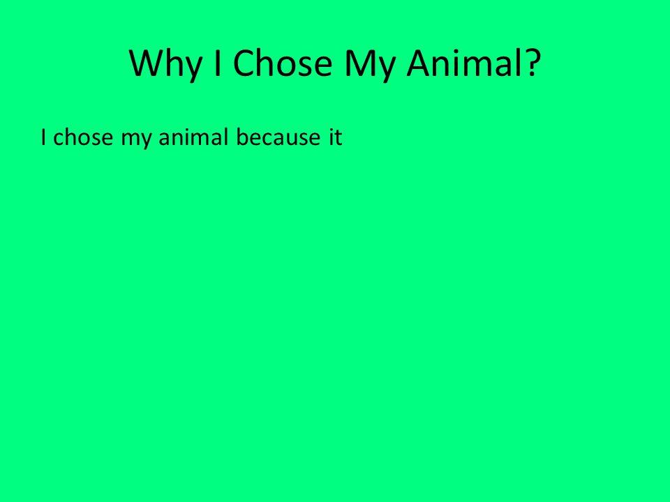 Why I Chose My Animal? I chose my animal because it