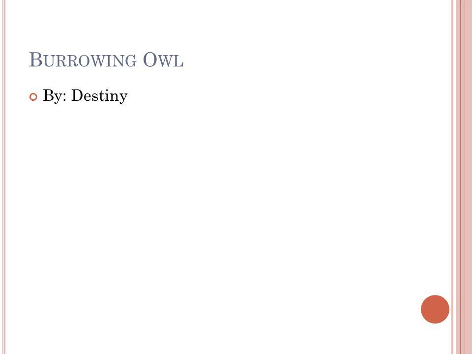 B URROWING O WL By: Destiny