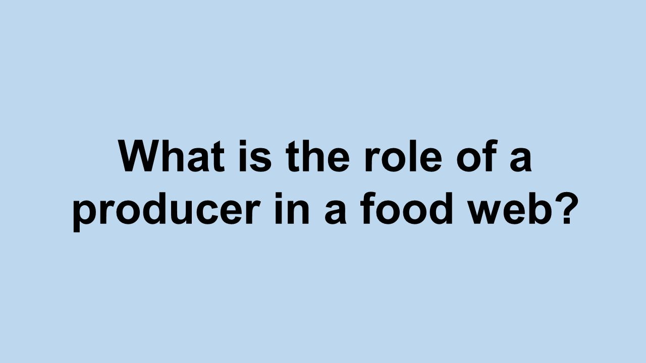 What is the role of a producer in a food web