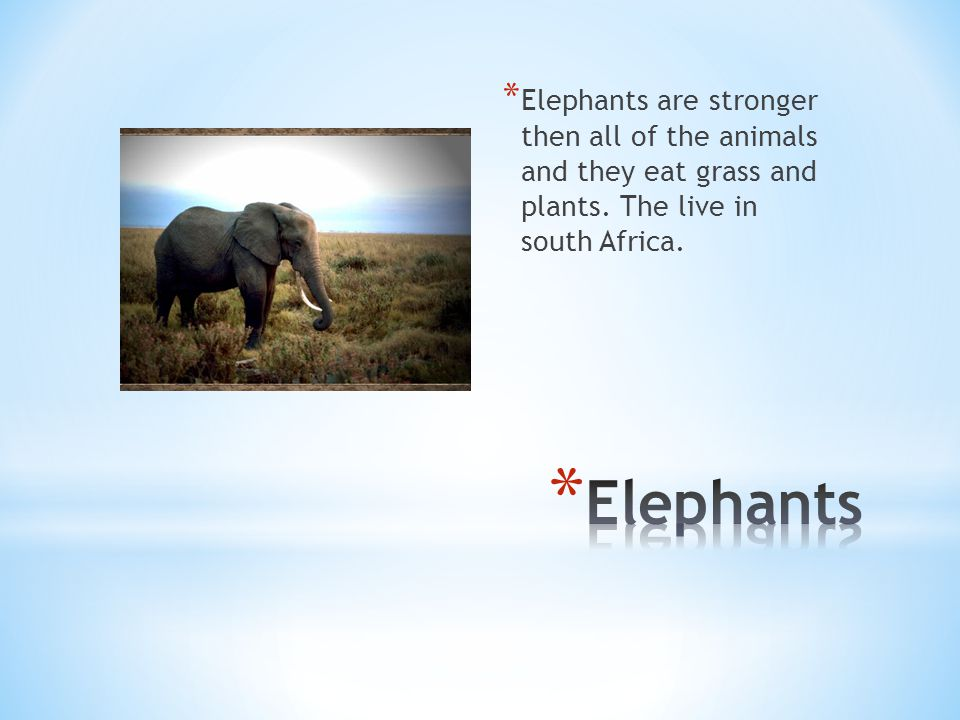 * Elephants are stronger then all of the animals and they eat grass and plants.