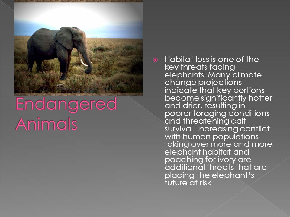  Habitat loss is one of the key threats facing elephants.