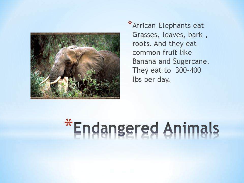 * African Elephants eat Grasses, leaves, bark, roots.