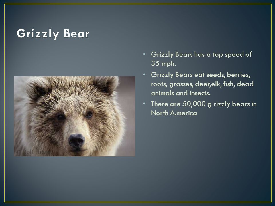 Grizzly Bears has a top speed of 35 mph.