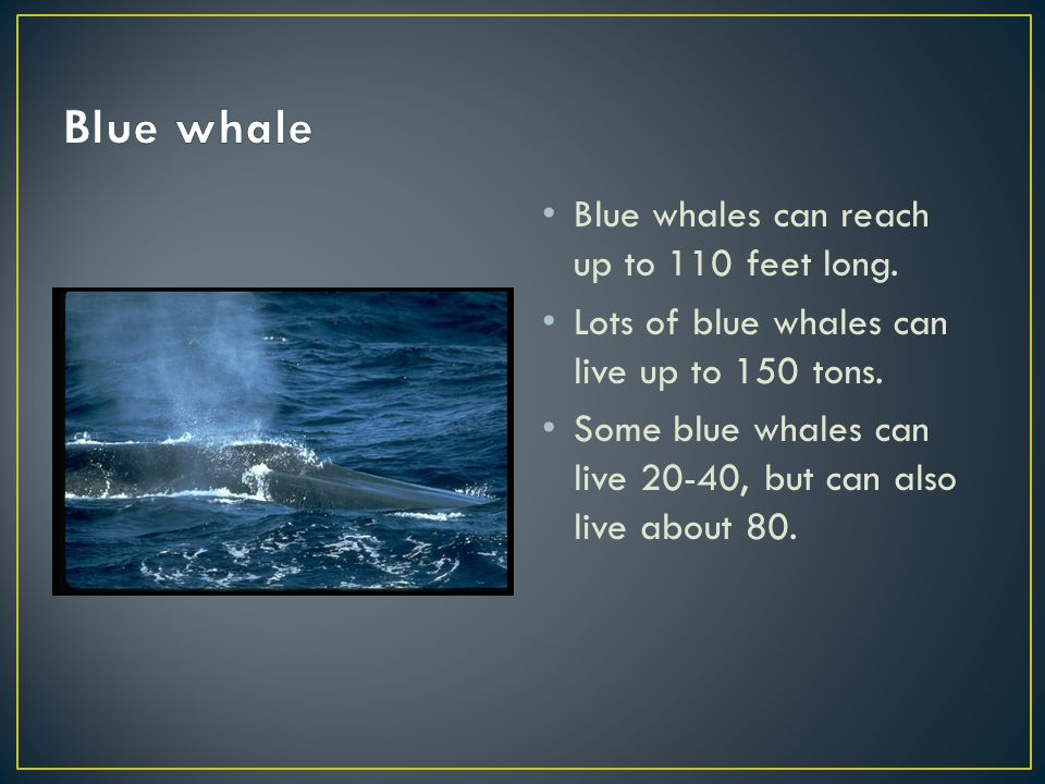 Blue whales can reach up to 110 feet long. Lots of blue whales can live up to 150 tons.