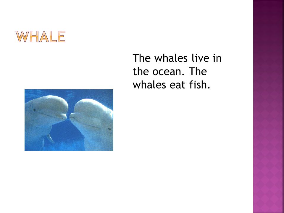 The whales live in the ocean. The whales eat fish.