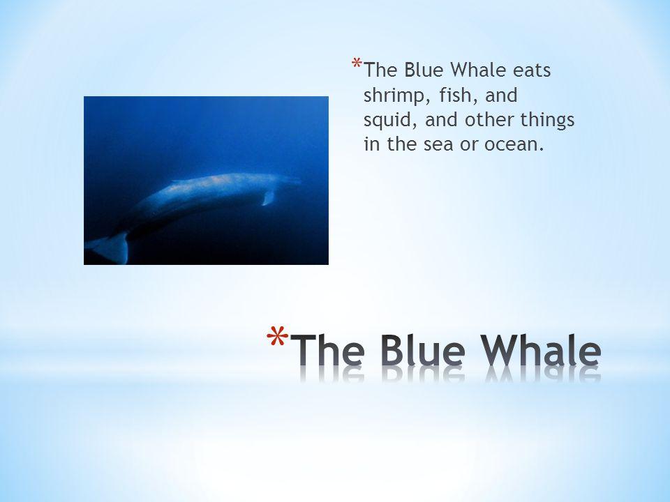 Beluga whales eat salmon, eulachon, tomcod, smelt, char, rainbow sole.