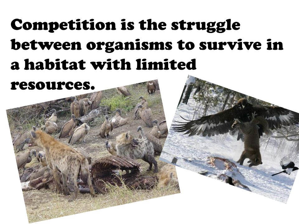 Explain how predator-prey relationships affect populations in an ecosystem.