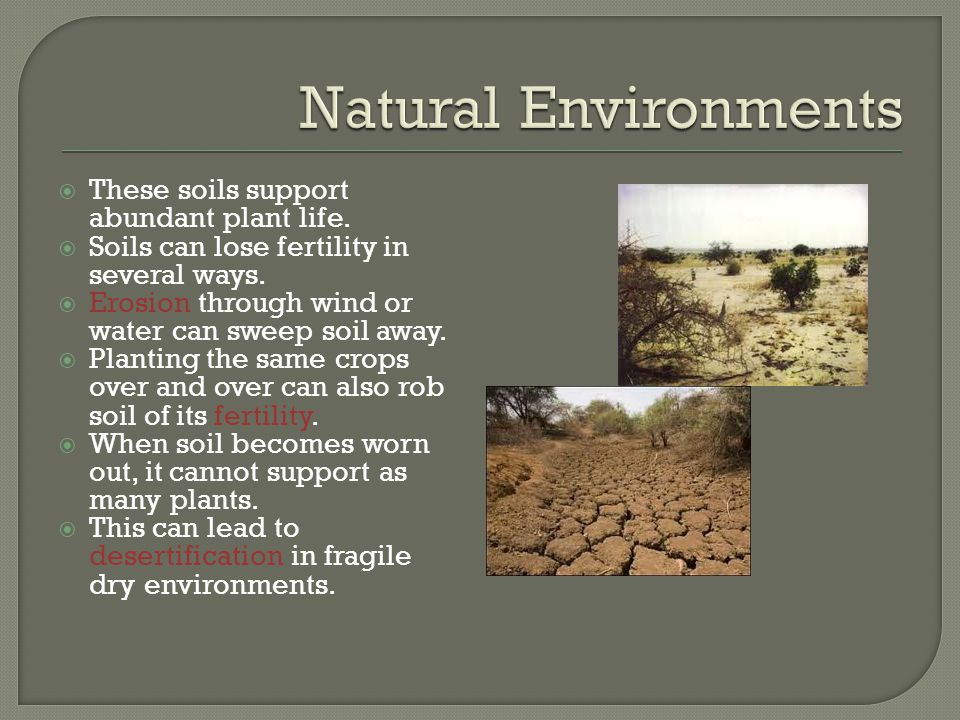  These soils support abundant plant life.  Soils can lose fertility in several ways.  Erosion through wind or water can sweep soil away.  Planting