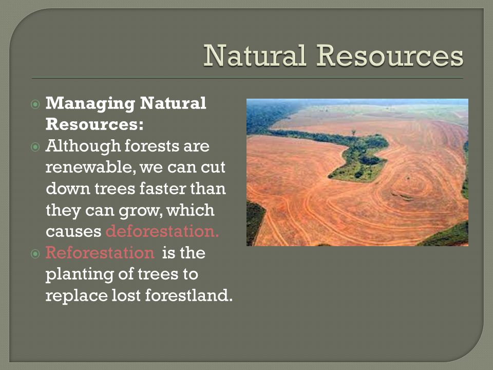  Managing Natural Resources:  Although forests are renewable, we can cut down trees faster than they can grow, which causes deforestation.  Refores