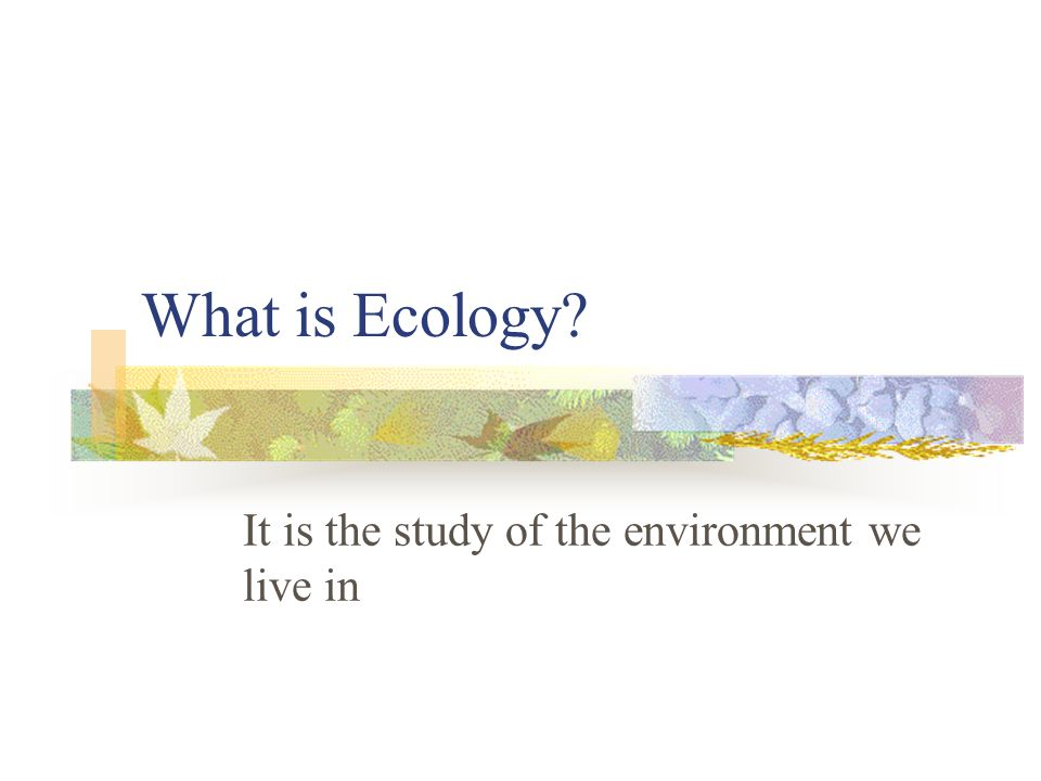What is Ecology? It is the study of the environment we live in