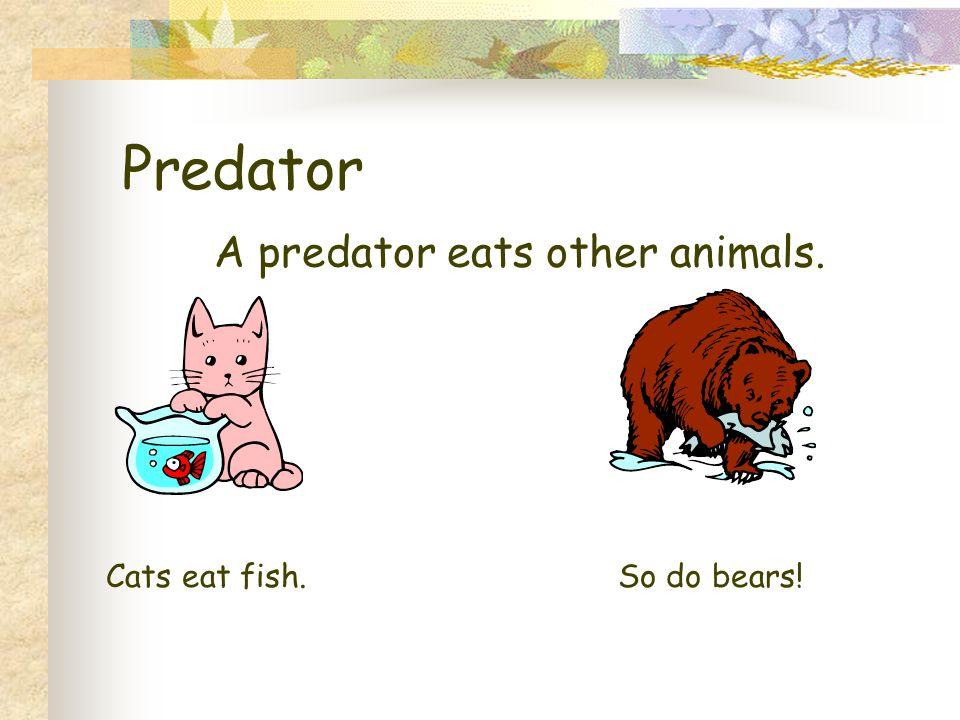 Predator A predator eats other animals. Cats eat fish.So do bears!