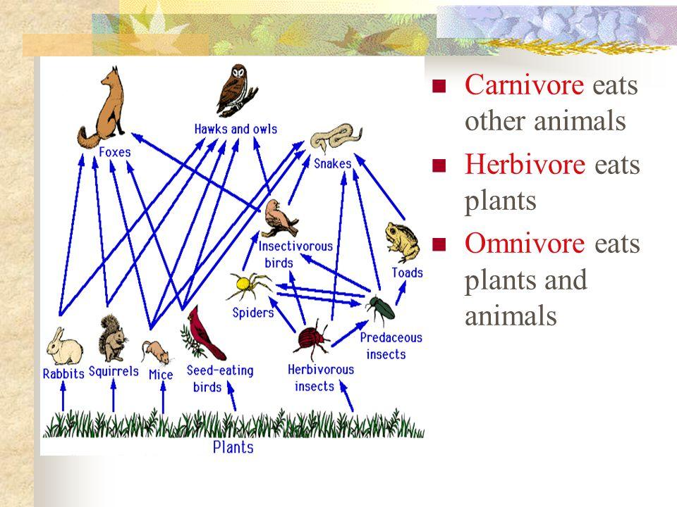 Carnivore eats other animals Herbivore eats plants Omnivore eats plants and animals