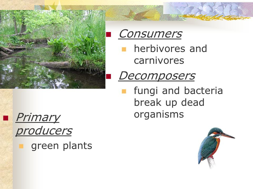 Consumers herbivores and carnivores Decomposers fungi and bacteria break up dead organisms Primary producers green plants