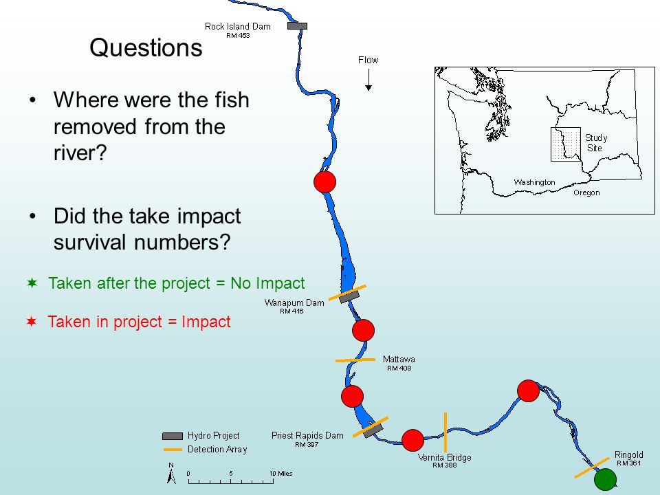 Questions Where were the fish removed from the river.