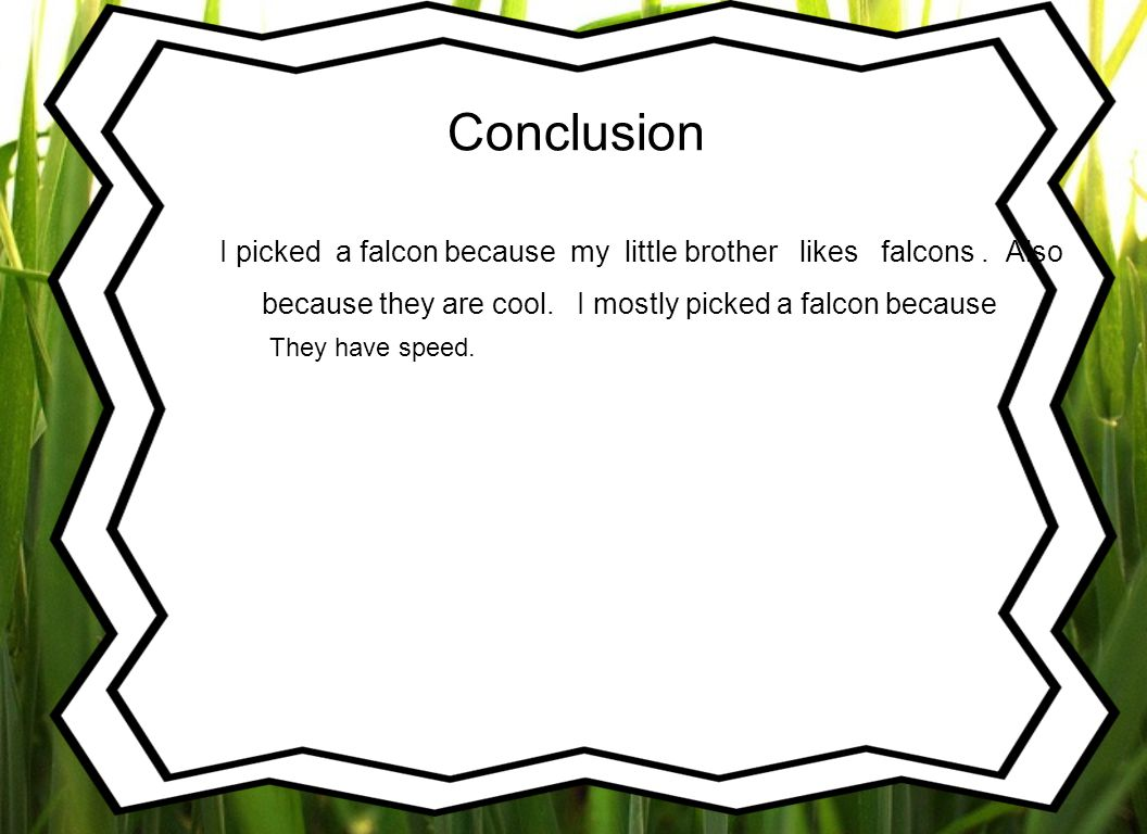 Conclusion I picked a falcon because my little brother likes falcons.