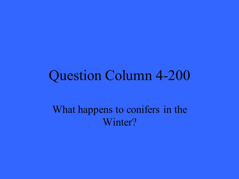 Question Column 4-200 What happens to conifers in the Winter