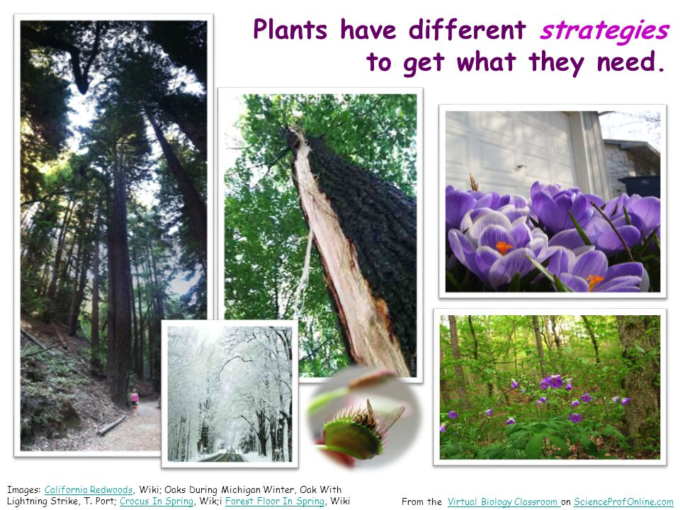 Plants have different strategies to get what they need. From the Virtual Biology Classroom on ScienceProfOnline.comVirtual Biology Classroom SciencePr