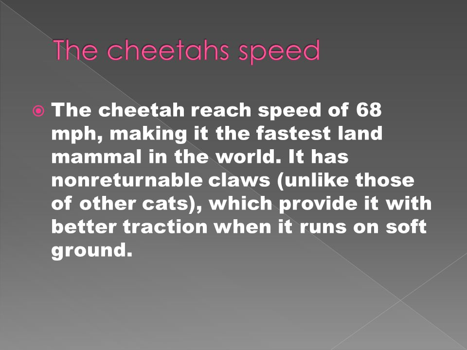  The cheetah reach speed of 68 mph, making it the fastest land mammal in the world.