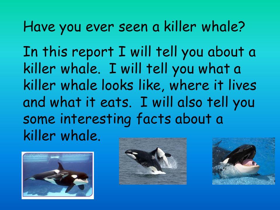 This is what a killer whale looks like.Killer whales are black and white.