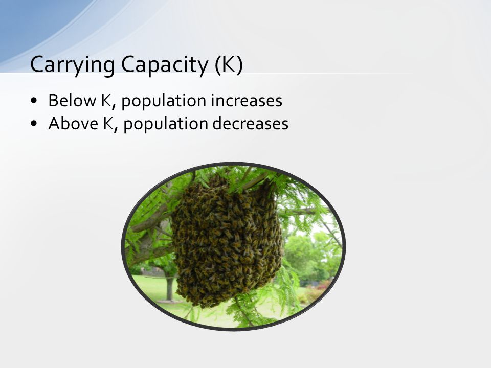 Below K, population increases Above K, population decreases Carrying Capacity (K)