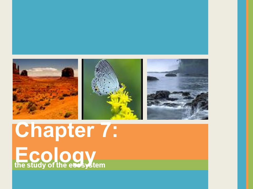 the study of the ecosystem Chapter 7: Ecology