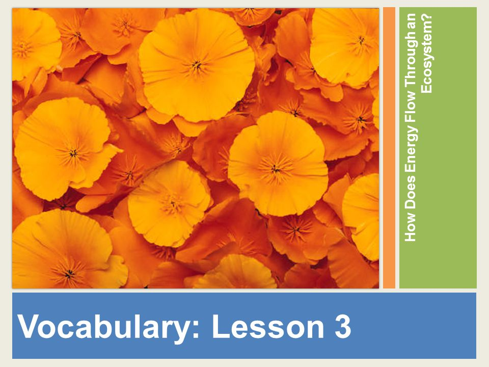 Vocabulary: Lesson 3 How Does Energy Flow Through an Ecosystem?