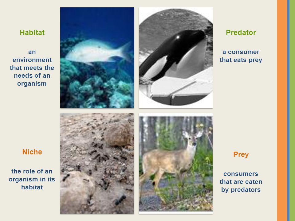 Habitat an environment that meets the needs of an organism Predator a consumer that eats prey Niche the role of an organism in its habitat Prey consum