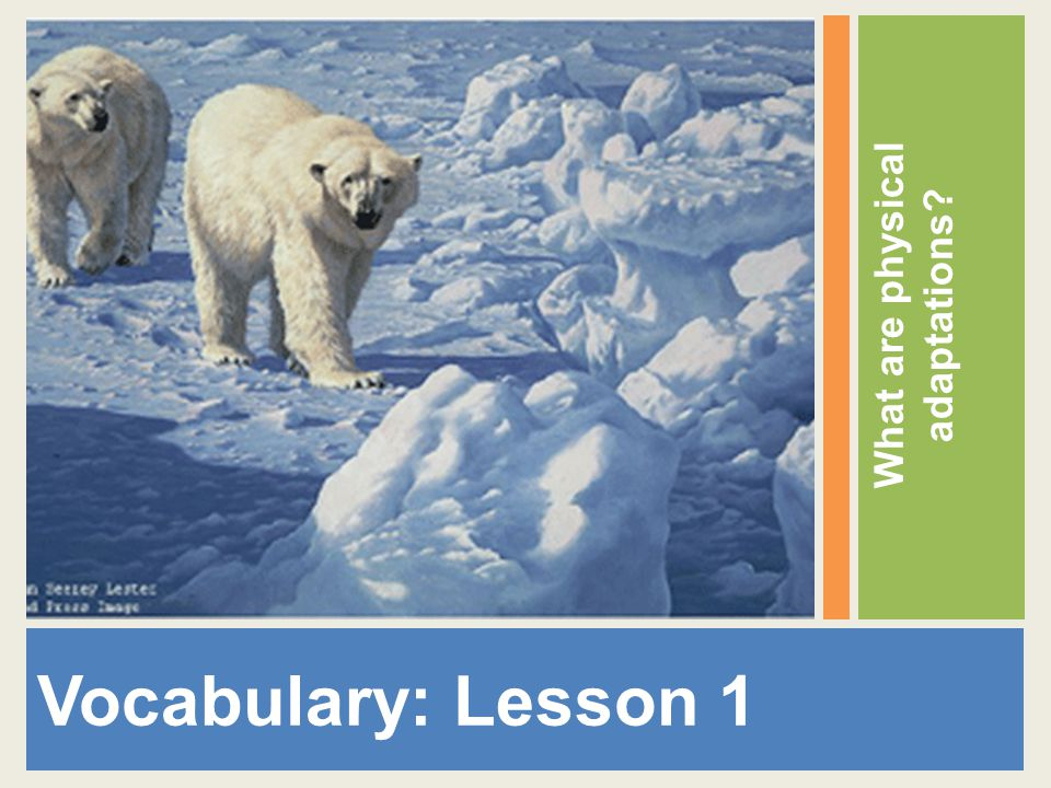 Vocabulary: Lesson 1 What are physical adaptations?
