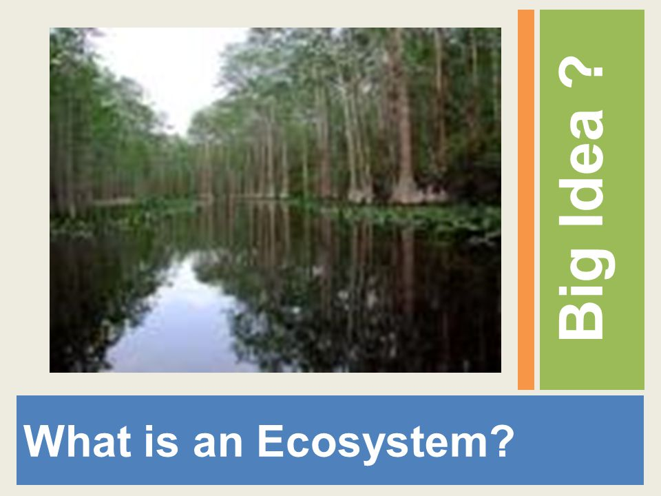 What is an Ecosystem? Big Idea ?