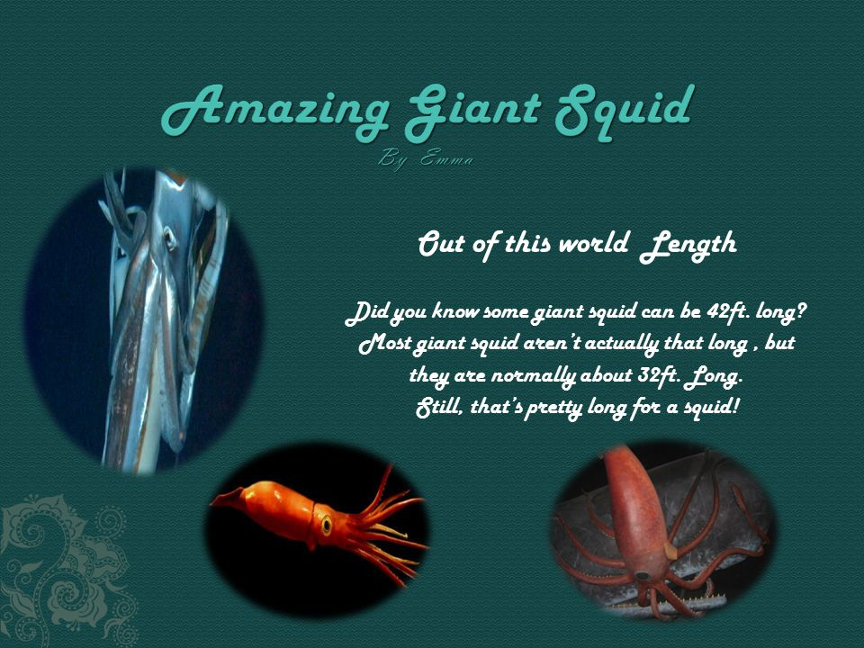 Out of this world Length Did you know some giant squid can be 42ft.