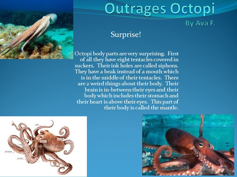 Surprise. Octopi body parts are very surprising.