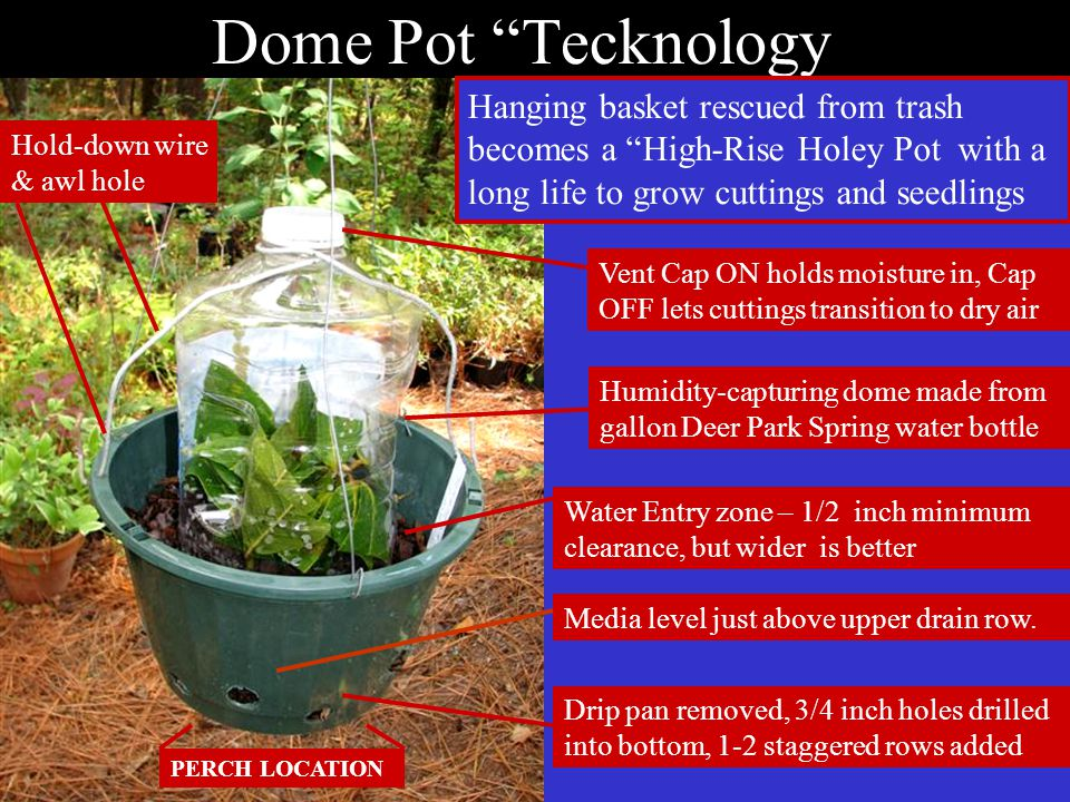 Dome Pot Tecknology Humidity-capturing dome made from gallon Deer Park Spring water bottle Water Entry zone – 1/2 inch minimum clearance, but wider is better Media level just above upper drain row.