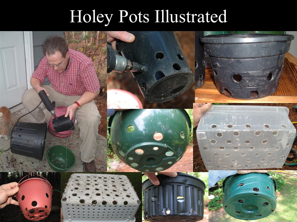 Holey Pots Illustrated