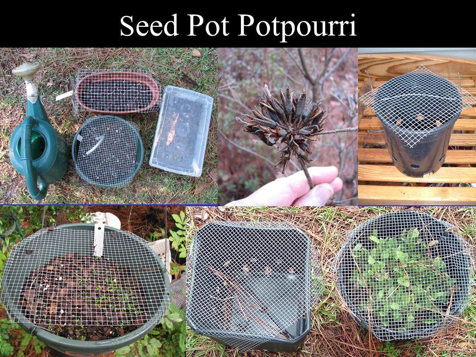 S eed Pot Potpourri