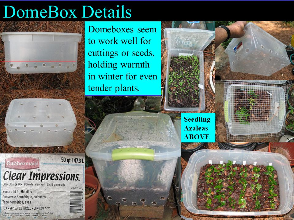 DomeBox Details Seedling Azaleas ABOVE Domeboxes seem to work well for cuttings or seeds, holding warmth in winter for even tender plants.