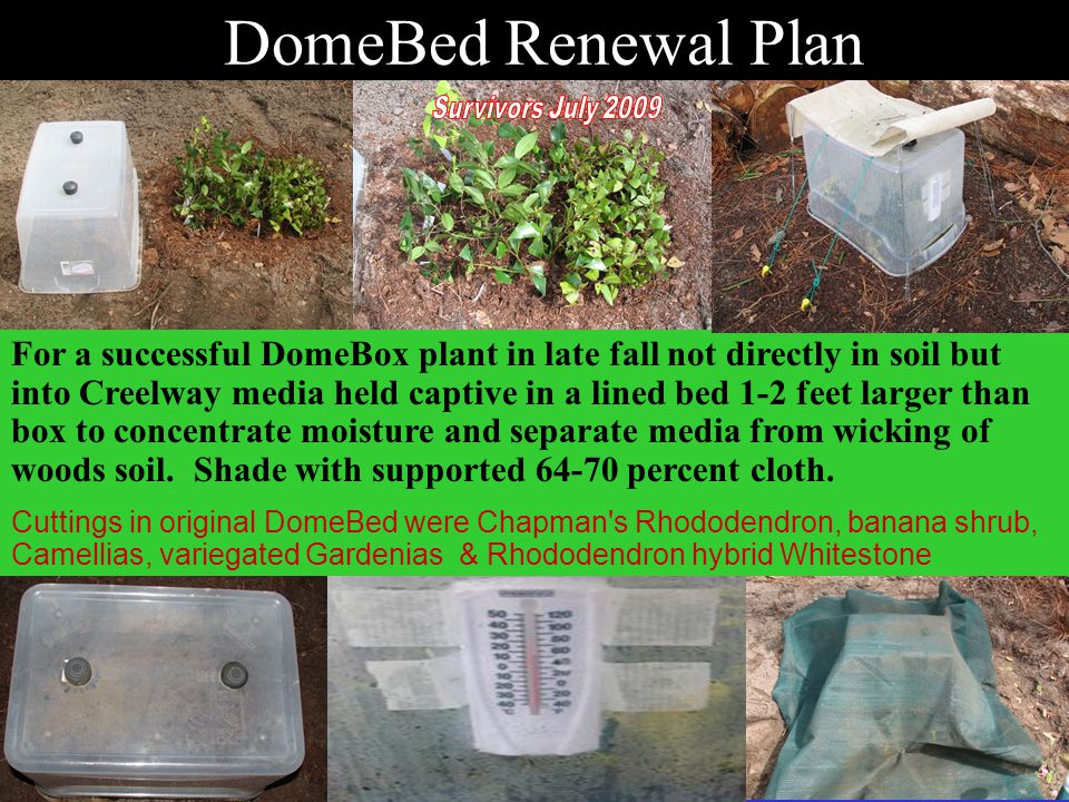For a successful DomeBox plant in late fall not directly in soil but into Creelway media held captive in a lined bed 1-2 feet larger than box to concentrate moisture and separate media from wicking of woods soil.