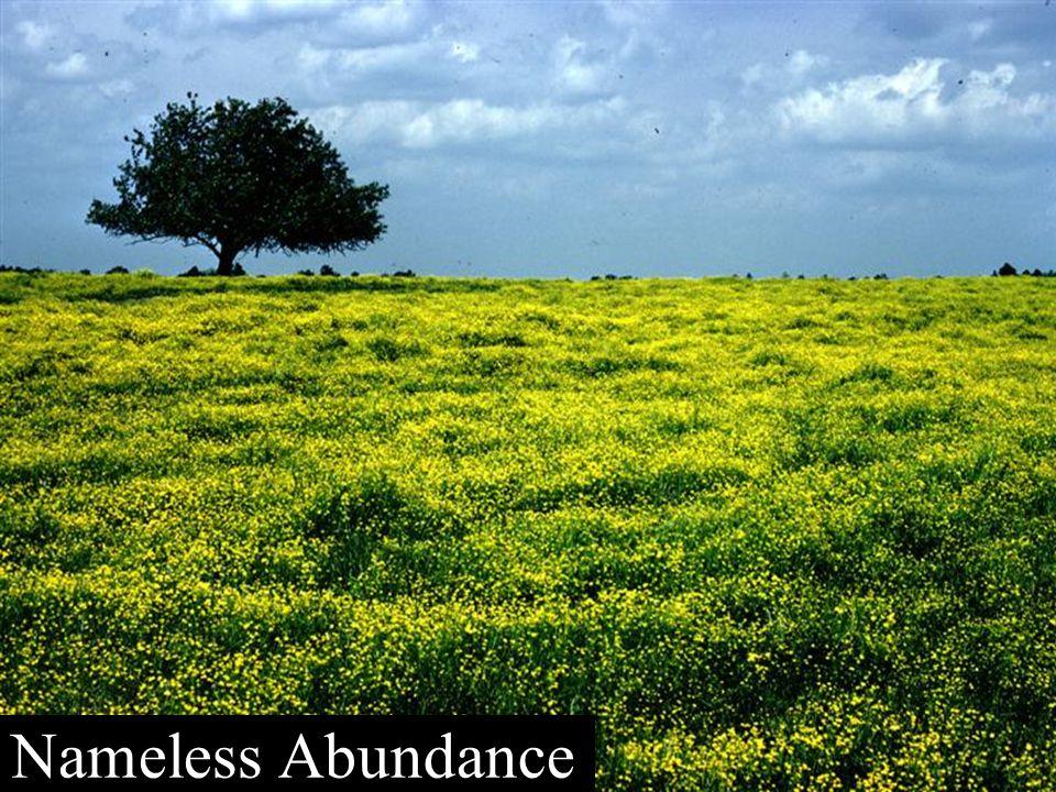 Nameless Abundance