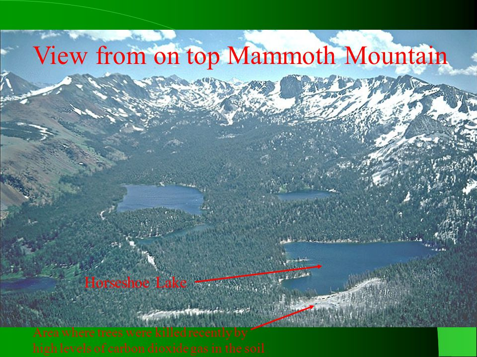 View from on top Mammoth Mountain Horseshoe Lake Area where trees were killed recently by high levels of carbon dioxide gas in the soil