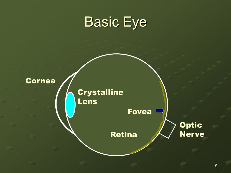 9 Basic Eye Cornea Crystalline Lens Fovea Retina Optic Nerve