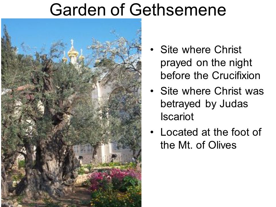 Garden of Gethsemene Site where Christ prayed on the night before the Crucifixion Site where Christ was betrayed by Judas Iscariot Located at the foot