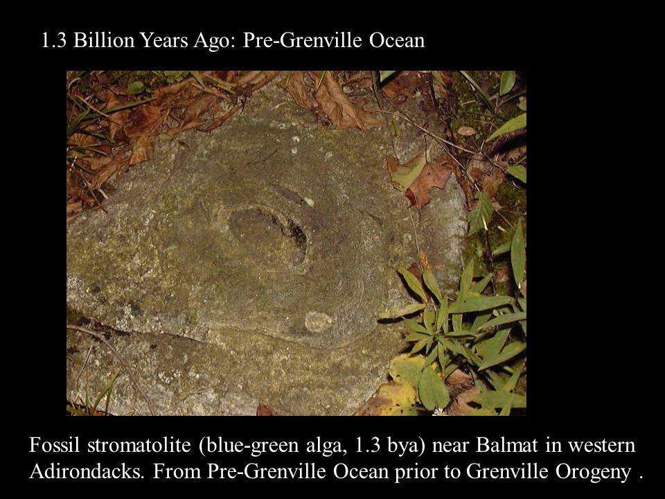 Fossil stromatolite (blue-green alga, 1.3 bya) near Balmat in western Adirondacks. From Pre-Grenville Ocean prior to Grenville Orogeny. 1.3 Billion Ye