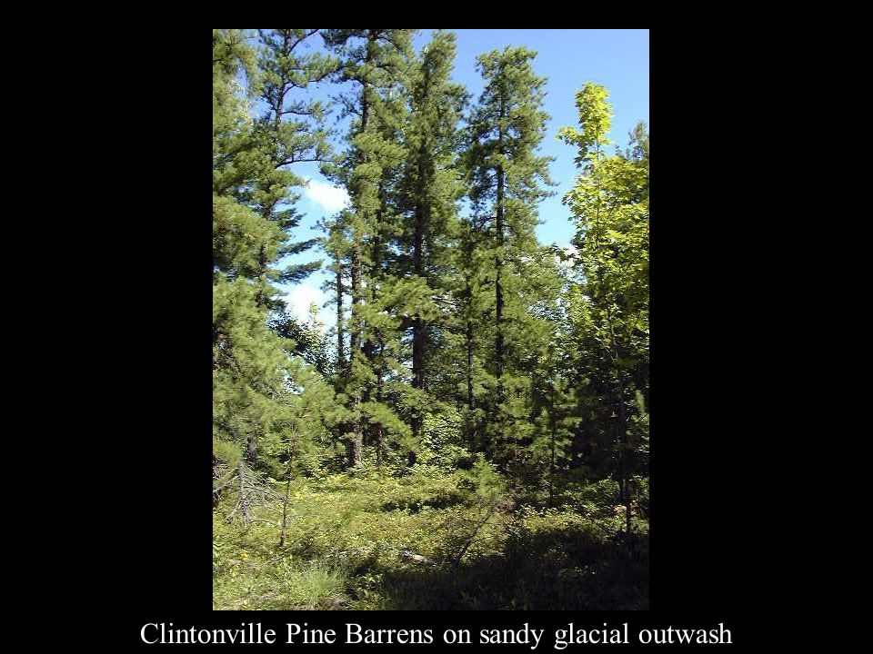 Clintonville Pine Barrens on sandy glacial outwash