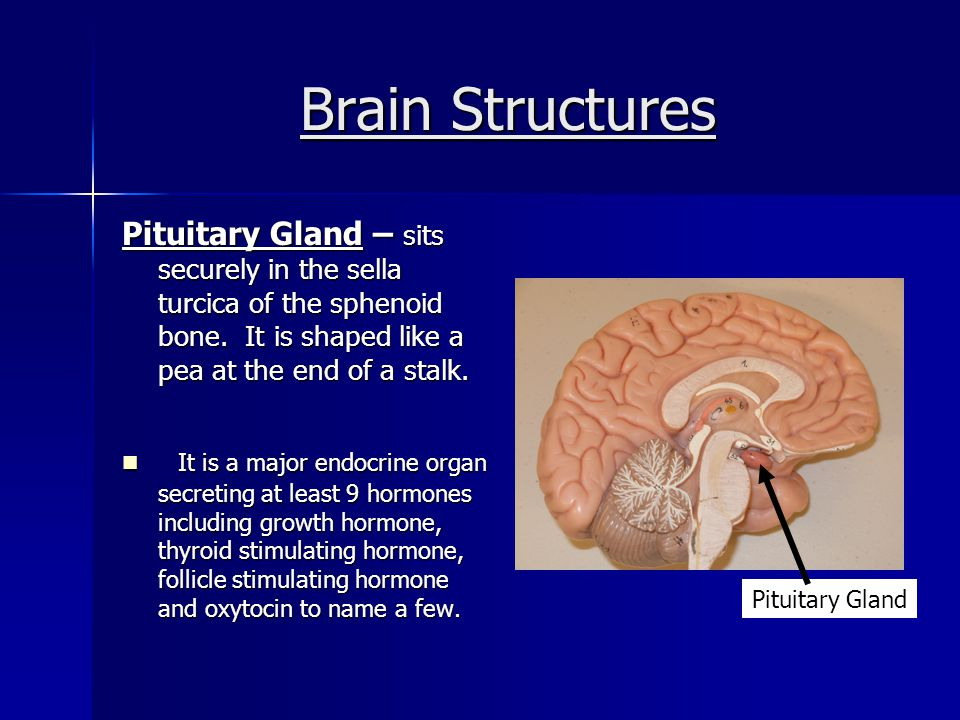 Brain Structures - CSF CSF (Cerebral Spinal Fluid) – is found in and around the brain and spinal cord.