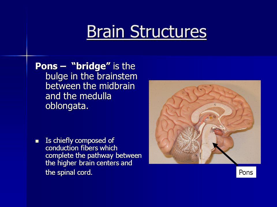 Brain Structures Medulla Oblongata – the most inferior part of the brain stem.
