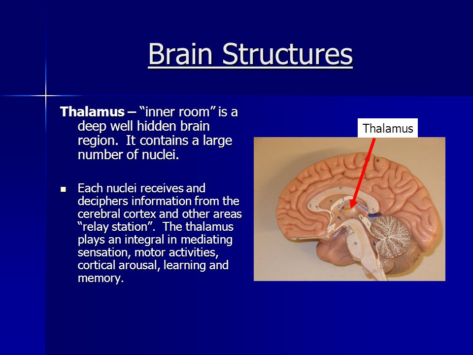 Brain Structures Midbrain – a conduction pathway between the higher and lower brain centers.