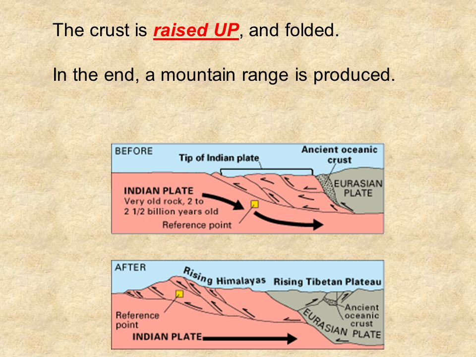 The crust is raised UP, and folded. In the end, a mountain range is produced.