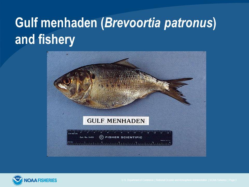 Gulf menhaden ( Brevoortia patronus ) and fishery U.S.