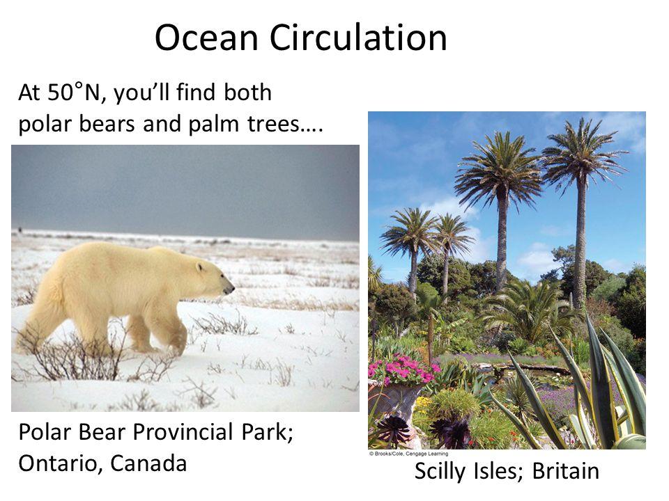 Ocean Circulation Polar Bear Provincial Park; Ontario, Canada Scilly Isles; Britain At 50°N, you'll find both polar bears and palm trees….