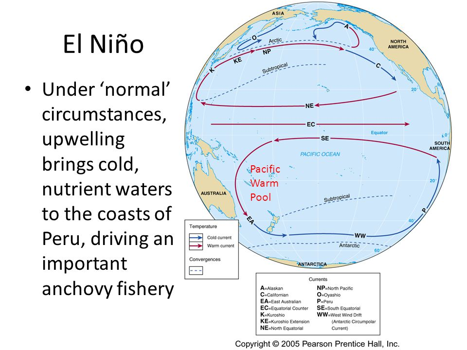 El Niño Under 'normal' circumstances, upwelling brings cold, nutrient waters to the coasts of Peru, driving an important anchovy fishery Pacific Warm