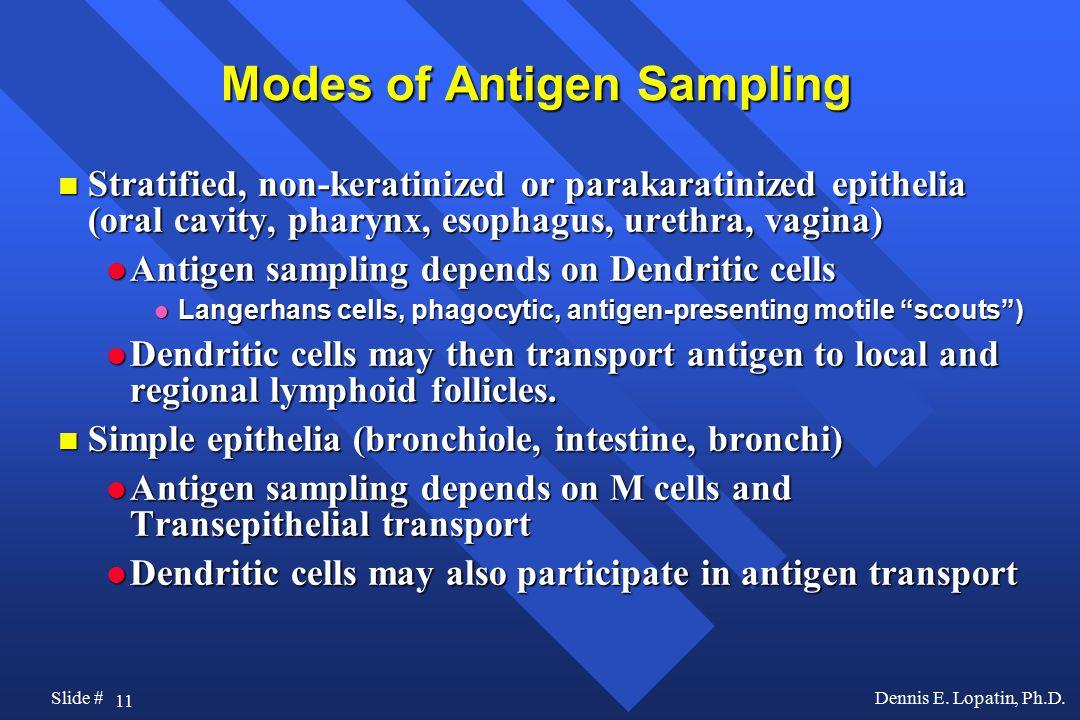 11 Slide #Dennis E. Lopatin, Ph.D.